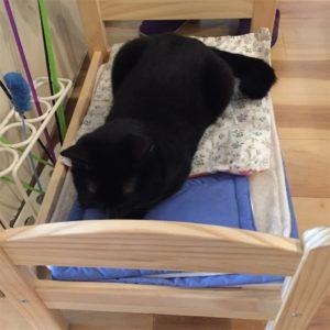 ベッドに寝ている黒猫